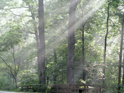 Crepuscular rays streamind down and to the left through the woods of Thomas Jefferson's Monticello, Charlottesville, Virgina