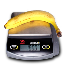 cavensish banana