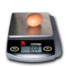 Large chicken egg on an electronic balance reading 65.9 grams
